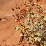 Valley of Fire State Park_MG_3329
